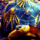 Turtle's Pace | Poems about Life